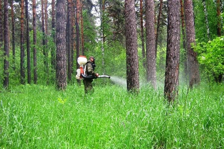 Обработка от клещей лесных массивов в Магнитогорске